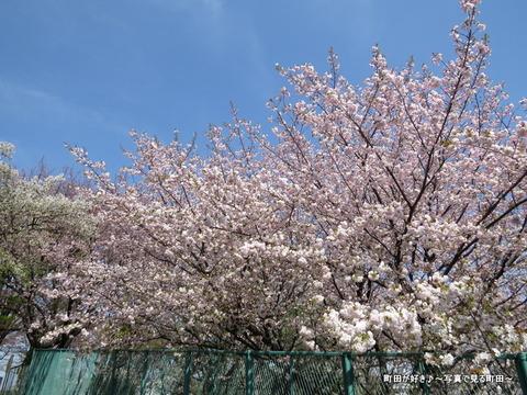 20140412018八重桜(ヤエザクラ)@城山公園(成瀬城跡)