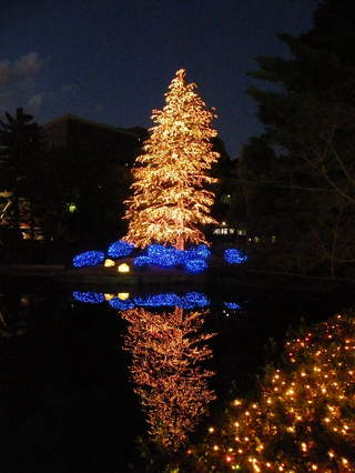 2008120630.jpg 玉川学園クリスマスツリー