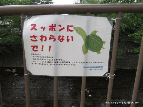 2014081601スッポンにさわらないで!!