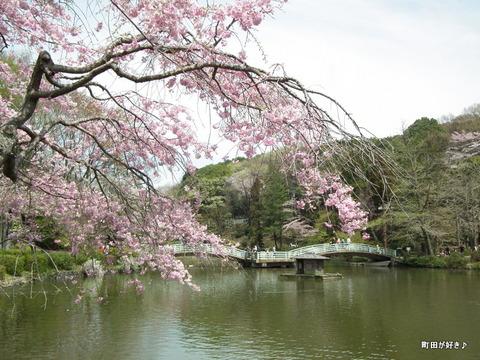 20120415127ヤエベニシダレ薬師池公園