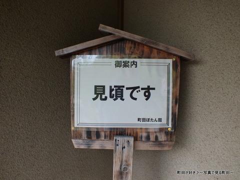 20130420227町田ぼたん園