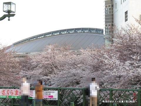 20140330115恩田川沿いの桜並木