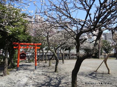 2014030818町田天満宮の梅の花