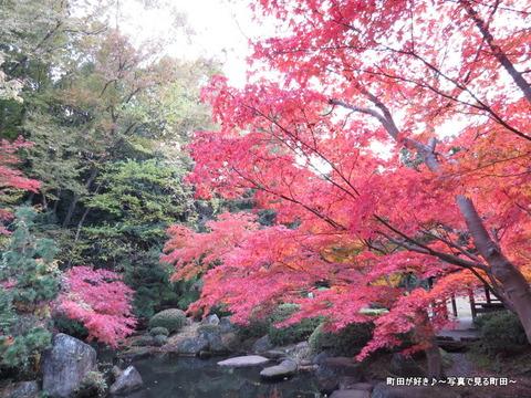 2014112321紅葉@町田市・芹ヶ谷公園