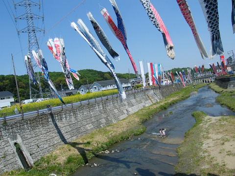 20090429100.jpg 平成21年第6回鶴見川泳げ鯉のぼり