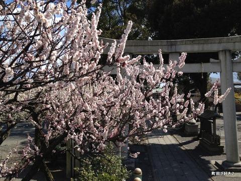 2012032535町田天満宮の梅