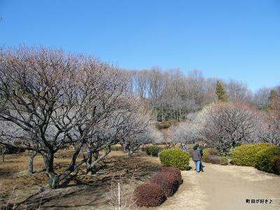 20100130053薬師池公園梅