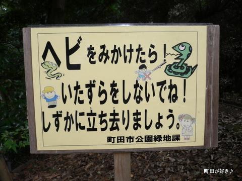 2009092335 芹ヶ谷公園を歩く ヘビ