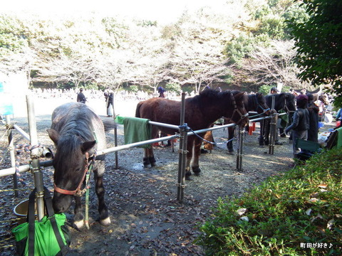 20101128078町田時代祭り・流鏑馬