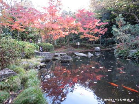 2013112435芹ヶ谷公園の不思議な紅葉