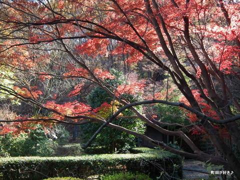 20101204053紅葉の薬師池公園