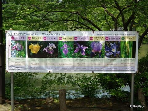 2011052111花菖蒲園@薬師池公園