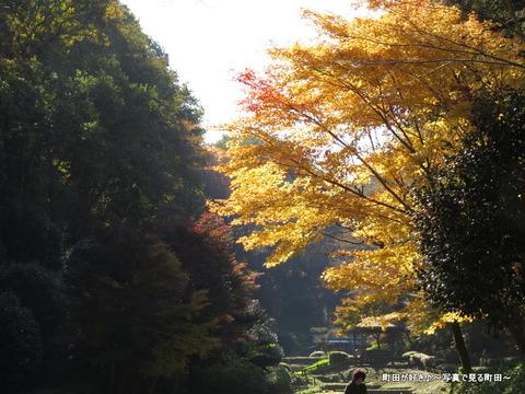 20131116133薬師池公園