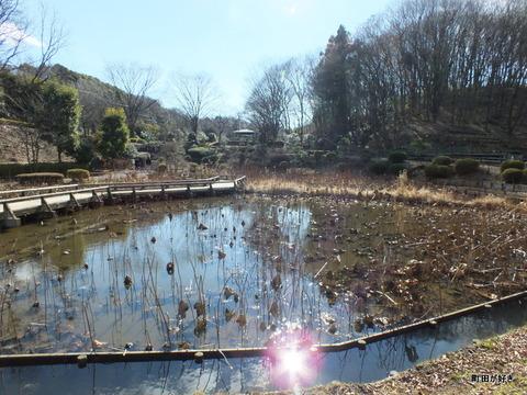 2012122461冬の薬師池公園