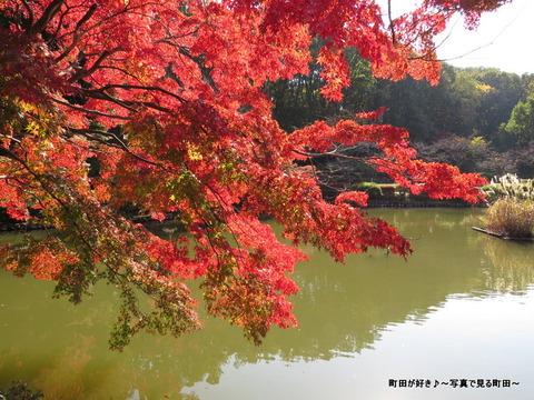 20131116094薬師池公園の紅葉