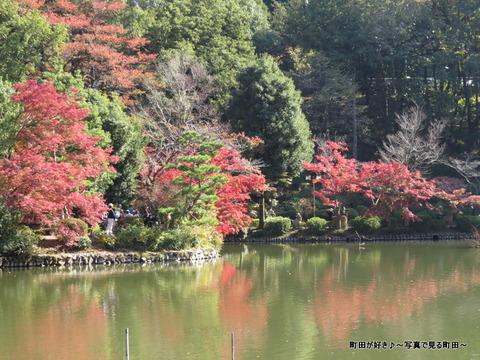 20131116080薬師池公園の紅葉