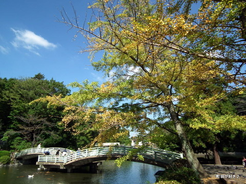 2010102343薬師池公園