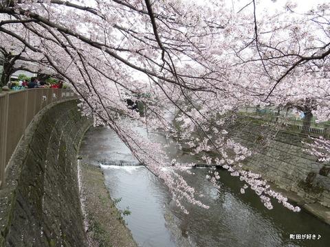 20160402157恩田川の桜