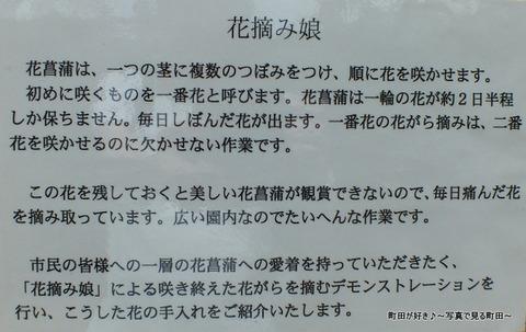 2013060824b花摘み娘・薬師池公園