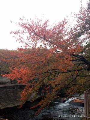 2013110901紅く色付く恩田川の桜並木