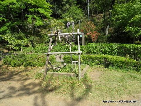 20140428136薬師池公園の藤の花