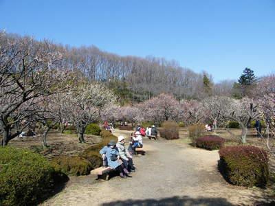 20090221027.jpg 薬師池公園の梅の花が見頃です