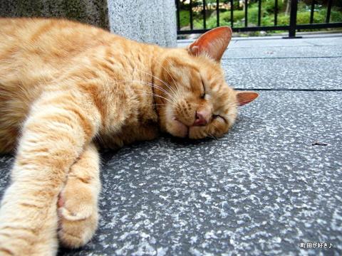 20100619307野良猫@横浜公園