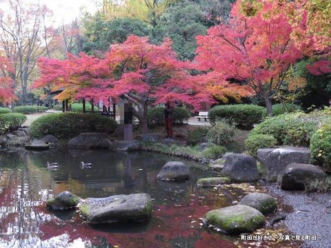2014112311紅葉@町田市・芹ヶ谷公園