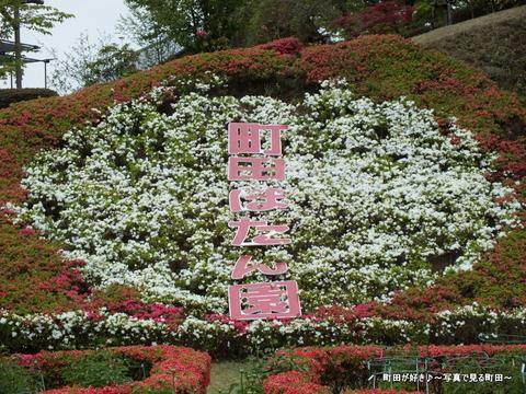20130420128町田ぼたん園