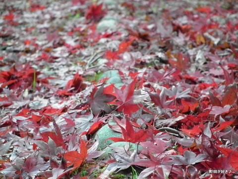 2011121165紅葉と野鳥@薬師池公園