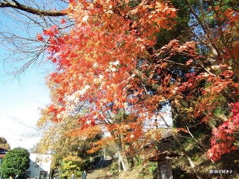2011121180紅葉と野鳥@薬師池公園