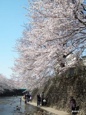 20120408107高瀬橋付近の桜、満開です