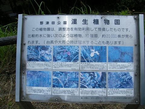 20080524115.jpg