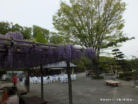 20130420112町田ぼたん園