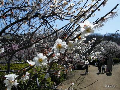 2010031434薬師池公園、梅花