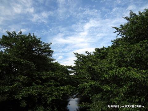 2015053119今日の恩田川の風景