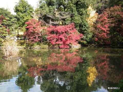 2011112013モミジ紅葉@薬師池公園
