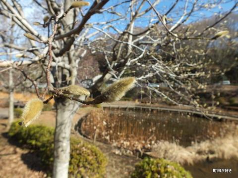 2012122455冬の薬師池公園