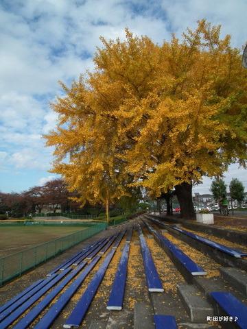 2010112148イチョウ町田市民球場