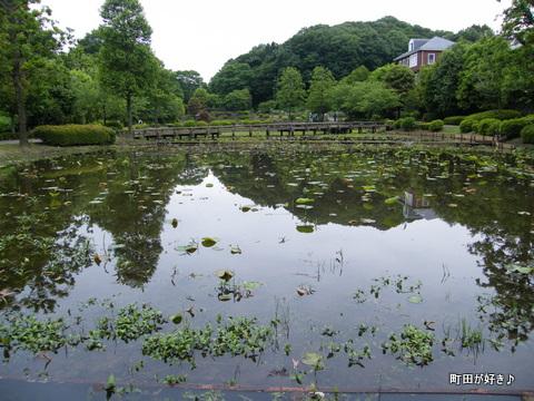 20100529212薬師池公園のハス田
