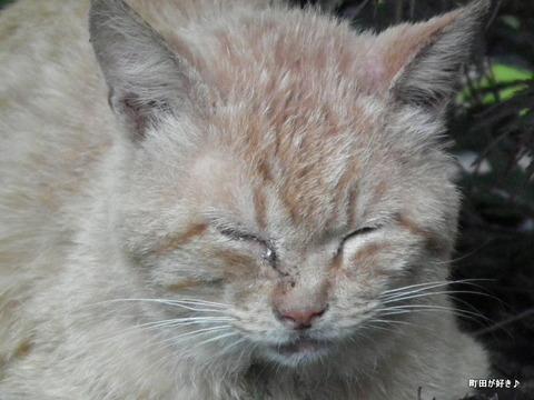 20120617011猫 ネコ ねこ