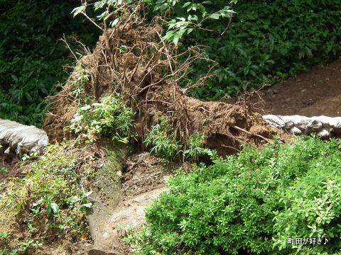 20120617121薬師池公園の土砂崩れ現場
