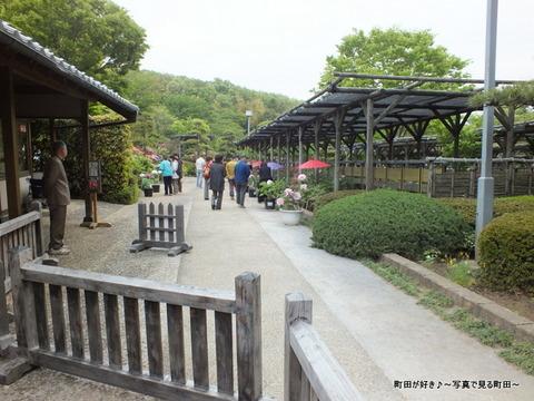 20130420100町田ぼたん園