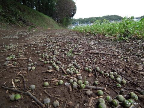 2011092332残念な、蕎麦の白い花たち