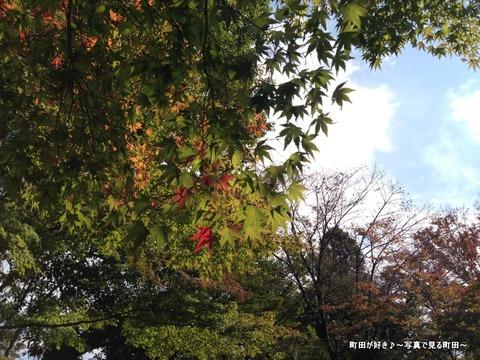 2014110305秋の芹ヶ谷公園の風景
