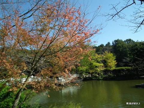 20111029049色付き始めた薬師池公園