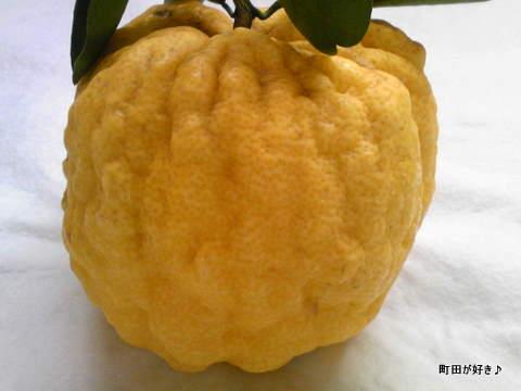 2009121003獅子柚子(ししゆず)