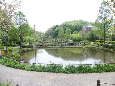20090418129.jpg 薬師池公園のハス田