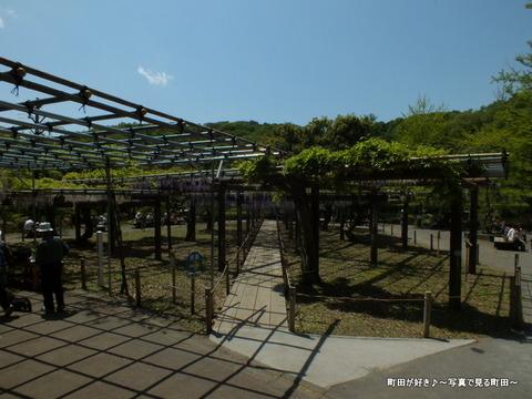 2013042719薬師池公園の六尺フジ