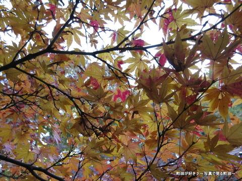 2013112439芹ヶ谷公園の不思議な紅葉